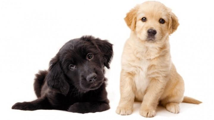 Doppen sparen voor geleidehonden