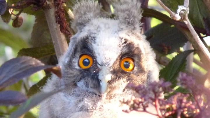 Vogelwachters invenstariseren ransuilen
