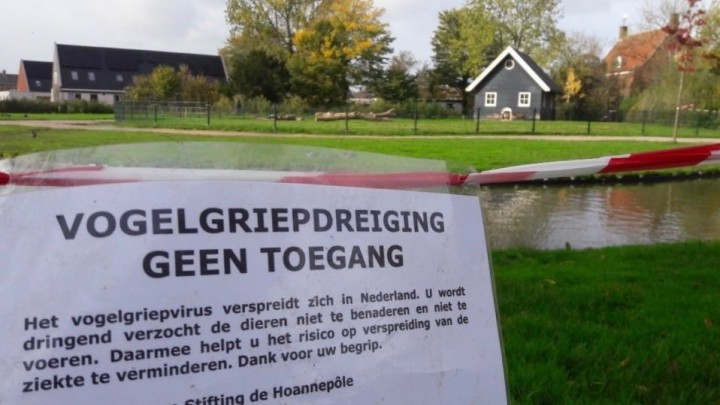 Eenden en pauw Wilhelminapark geruimd wegens vogelgriep